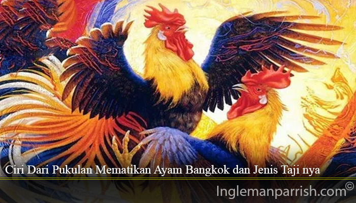 Ciri Dari Pukulan Mematikan Ayam Bangkok dan Jenis Taji nya